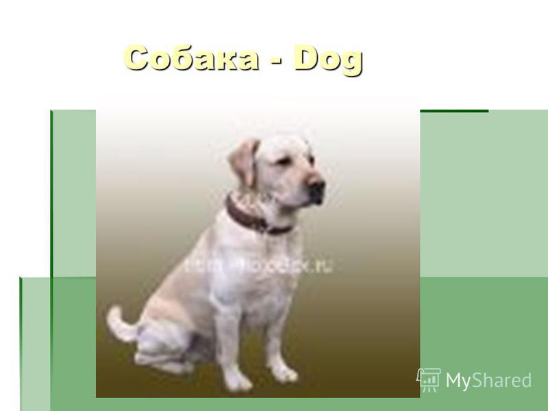Собака - Dog Собака - Dog