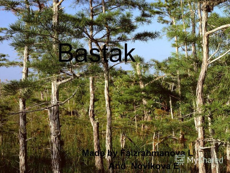 Bastak Made by Faizrahmanova L And Novikova E
