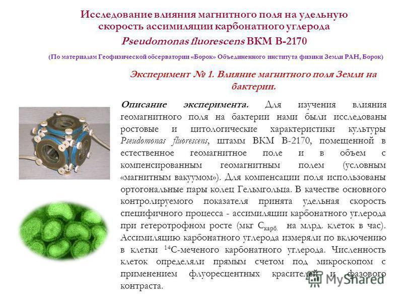 Исследование влияния магнитного поля на удельную скорость ассимиляции карбонатного углерода Pseudomonas fluorescens ВКМ В-2170 (По материалам Геофизической обсерватории «Борок» Объединенного института физики Земли РАН, Борок) Эксперимент 1. Влияние м