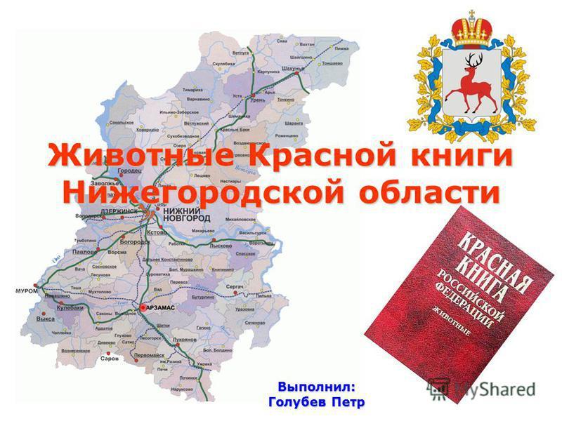 Животные Красной книги Нижегородской области Выполнил: Голубев Петр