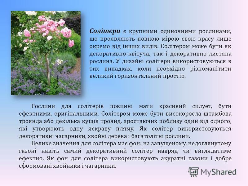 Солітери є крупними одиночними рослинами, що проявляють повною мірою свою красу лише окремо від інших видів. Солітером може бути як декоративно-квітуча, так і декоративно-листяна рослина. У дизайні солітери використовуються в тих випадках, коли необх