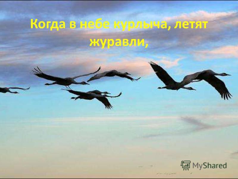 Когда в небе курлыча, летят журавли,
