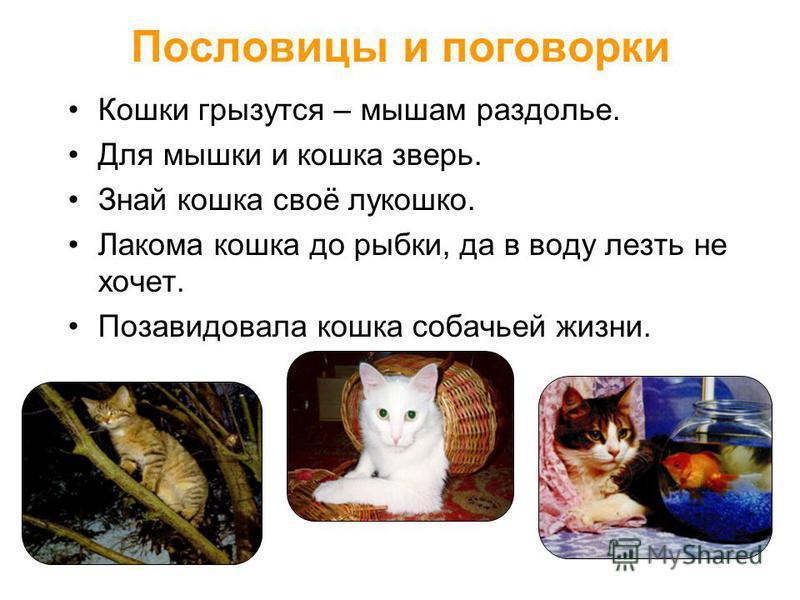 Пословицы и поговорки Кошки грызутся – мышам раздолье. Для мышки и кошка зверь. Знай кошка своё лукошко. Лакома кошка до рыбки, да в воду лезть не хочет. Позавидовала кошка собачьей жизни.