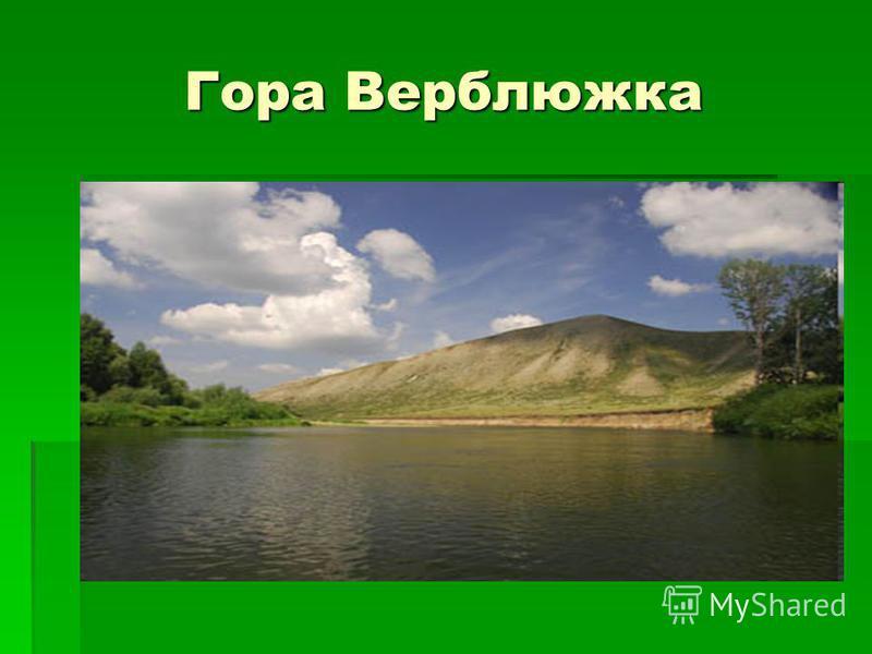 Гора Верблюжка