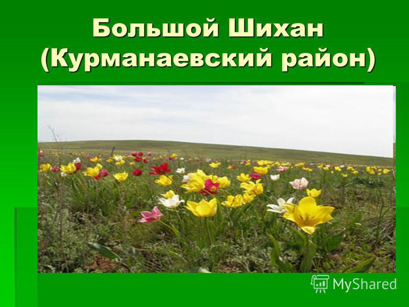 Большой Шихан (Курманаевский район)