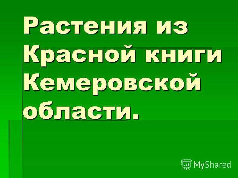 Растения из Красной книги Кемеровской области. Растения из Красной книги Кемеровской области.