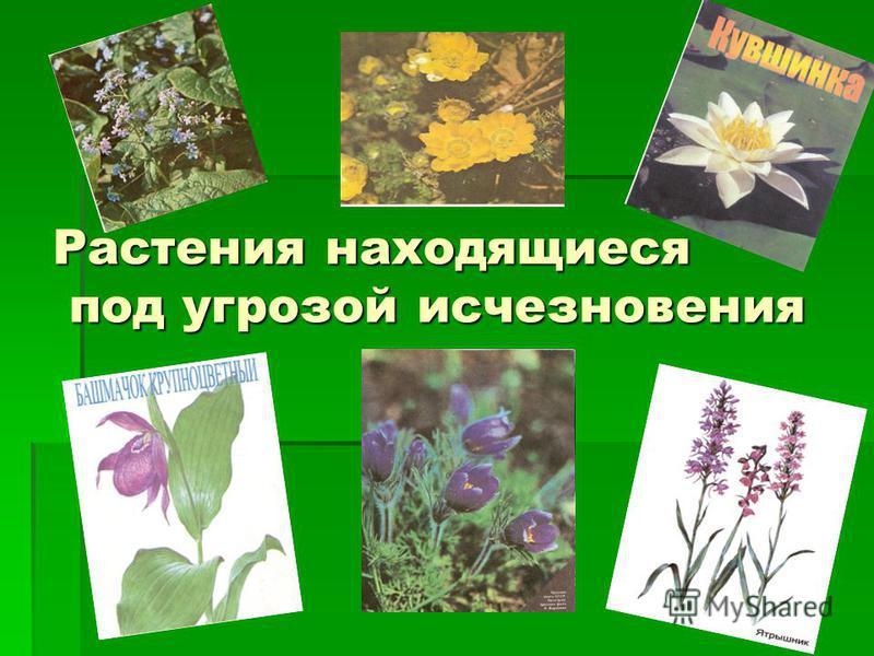 Растения находящиеся под угрозой исчезновения