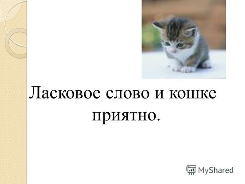 Ласковое слово и кошке приятно.