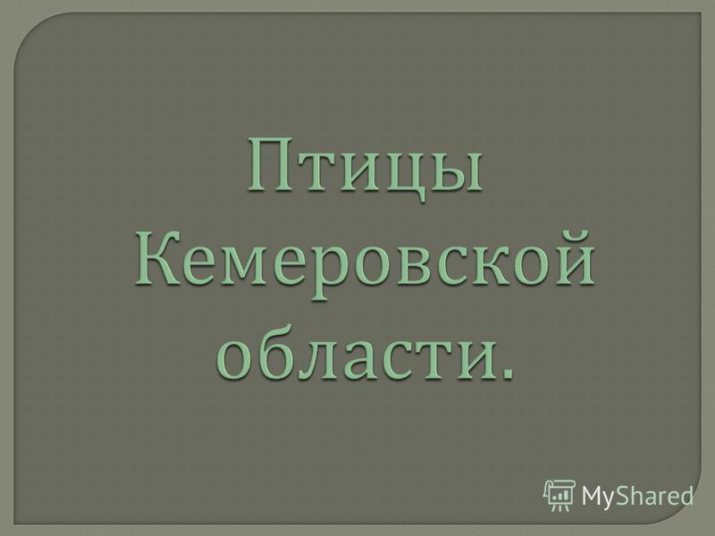 Птицы Кемеровской области.