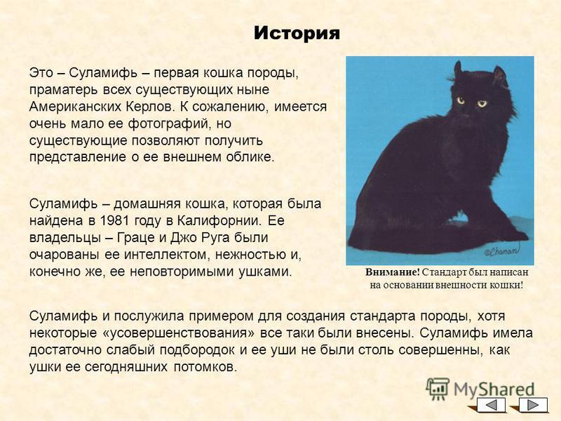 Американский Керл История и Особенности породы Lisa Aring © Светлана Пономарева 2002