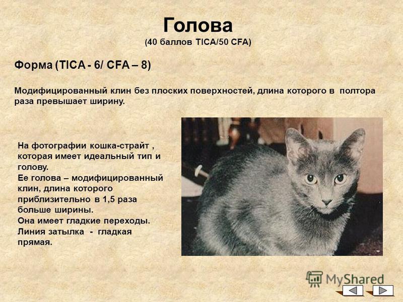 На основе стандартов TICA и CFA Общее описание Американский карл - результат случайной мутации уха в поголовье домашних кошек США. Первый представитель породы был найден в Южной Калифорнии в 1981 г - это была кошка по имени