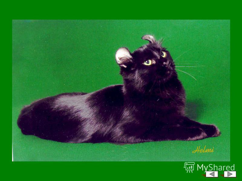 Далее – фотографии животных с ушами выставочного качества…
