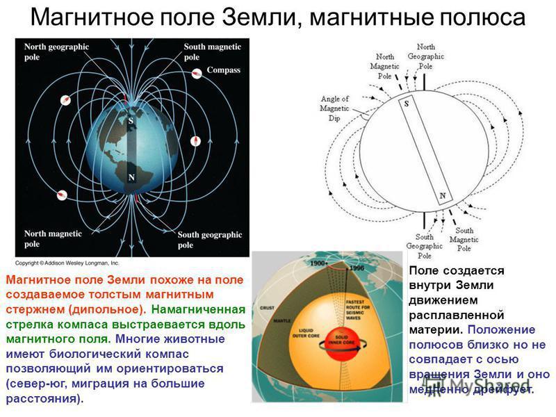 Магнитное поле Земли, магнитные полюса Магнитное поле Земли похоже на поле создаваемое толстым магнитным стержнем (дипольное). Намагниченная стрелка компаса выстраивается вдоль магнитного поля. Многие животные имеют биологический компас позволяющий и