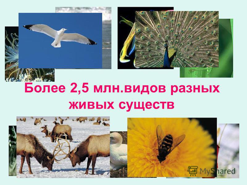 Более 2,5 млн.видов разных живых существ