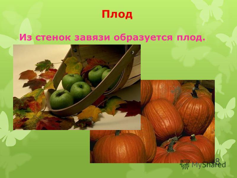 Плод Из стенок завязи образуется плод. 18