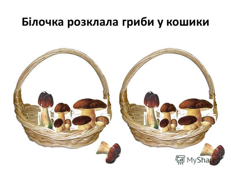 Білочка розклала гриби у кошики