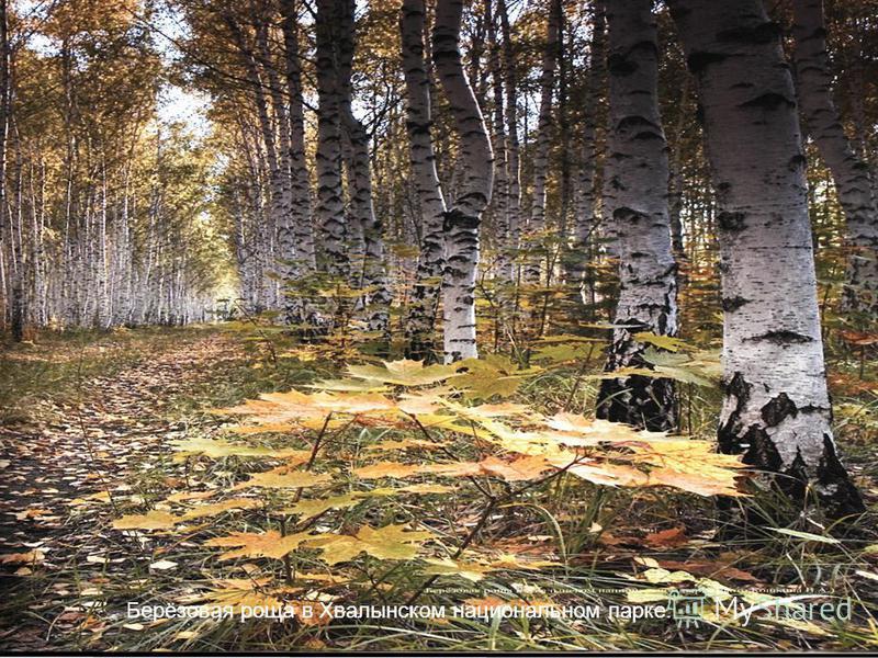 12 Установите ЧЕТКИЕ цели (продолжение) Установите общие цели Назначьте ответственных Берёзовая роща в Хвалынском национальном парке.