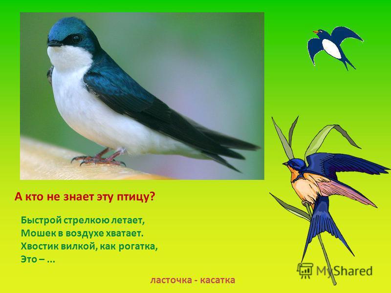 А кто не знает эту птицу? ласточка - касатка Быстрой стрелкою летает, Мошек в воздухе хватает. Хвостик вилкой, как рогатка, Это –...