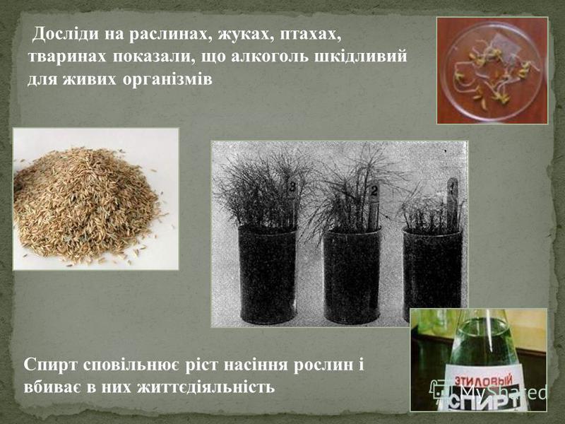 Досліди на раслинах, жуках, птахах, тваринах показали, що алкоголь шкідливий для живих організмів Спирт сповільнює ріст насіння рослин і вбиває в них життєдіяльність