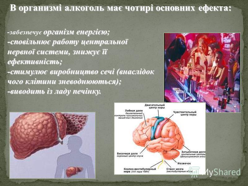 В организмі алкоголь має чотирі основних ефекта: організм енергією; -забезпечує організм енергією; -сповільнює работу центральної нервної системи, знижує її ефективність; -стимулює виробництво сечі (внаслідок чого клітини зневоднюються); -виводить із