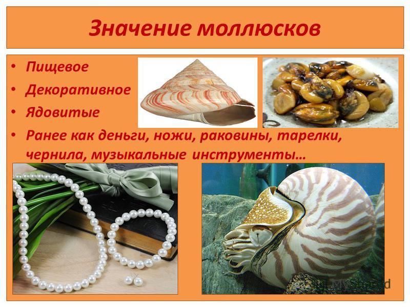 Значение моллюсков Пищевое Декоративное Ядовитые Ранее как деньги, ножи, раковины, тарелки, чернила, музыкальные инструменты…