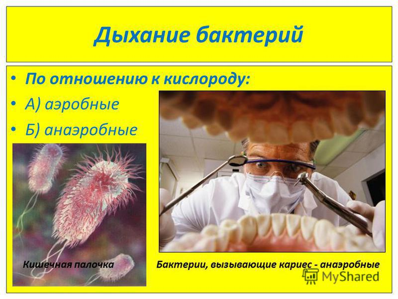 Бактерии вызывающие кариес