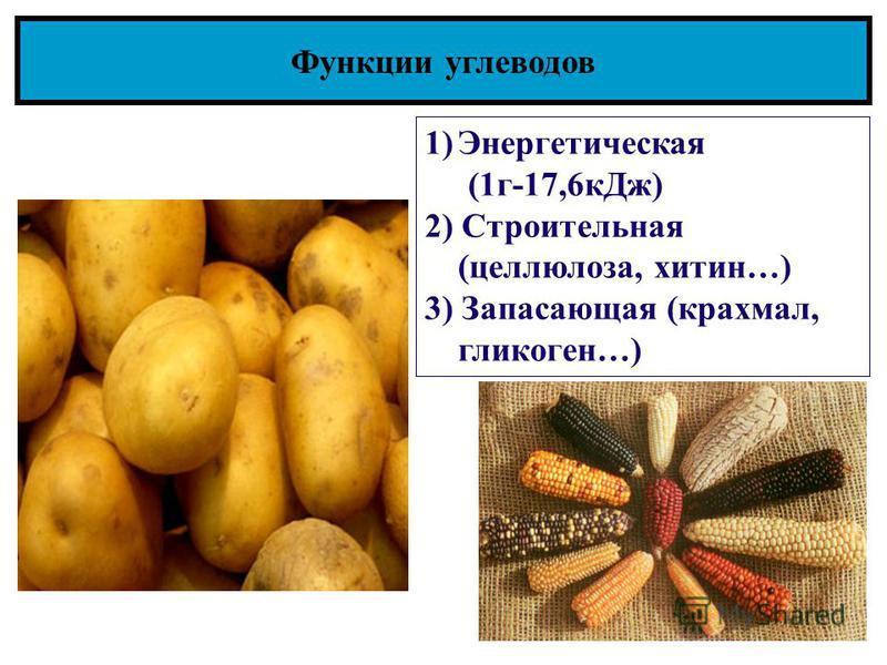 Функции углеводов 1)Энергетическая (1 г-17,6 к Дж) 2) Строительная (целлюлоза, хитин…) 3) Запасающая (крахмал, гликоген…)