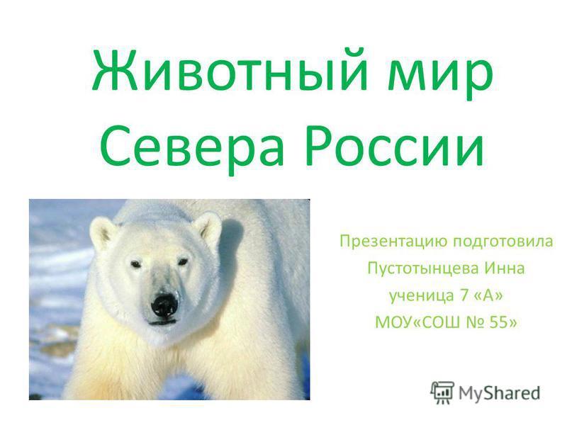 Животный мир Севера России Презентацию подготовила Пустотынцева Инна ученица 7 «А» МОУ«СОШ 55»
