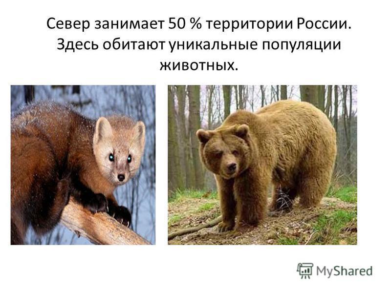Север занимает 50 % территории России. Здесь обитают уникальные популяции животных.