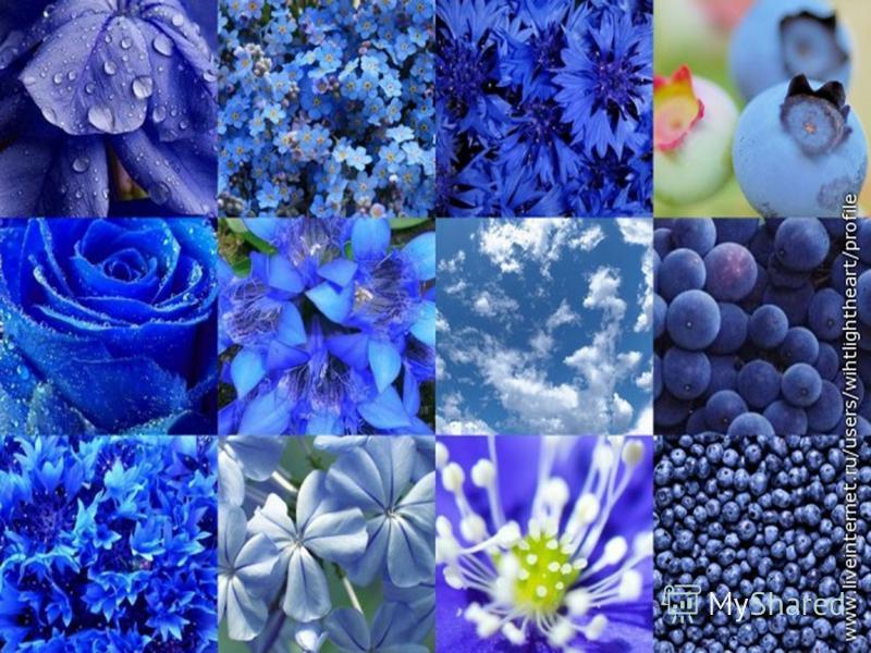 Синий - равновесие Плюсы: известен как успокоитель, помогающий при ожогах, воспалениях. Минусы: не советуют его много в еде- как правило, продукты синего цвета оказывают тормозящее влияние на пищеварительную систему.