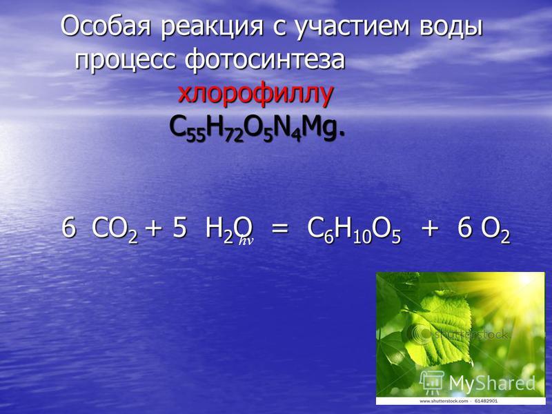Особая реакция с участием воды процесс фотосинтеза хлорофиллу C 55 H 72 O 5 N 4 Mg. Особая реакция с участием воды процесс фотосинтеза хлорофиллу C 55 H 72 O 5 N 4 Mg. 6 CO 2 + 5 H 2 O = C 6 H 10 O 5 + 6 O 2 6 CO 2 + 5 H 2 O = C 6 H 10 O 5 + 6 O 2 hν