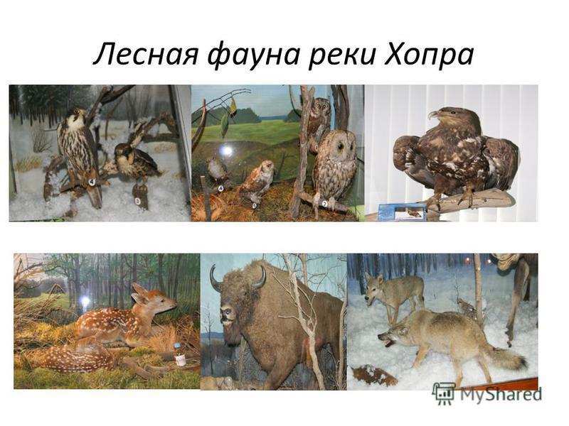 Лесная фауна реки Хопра
