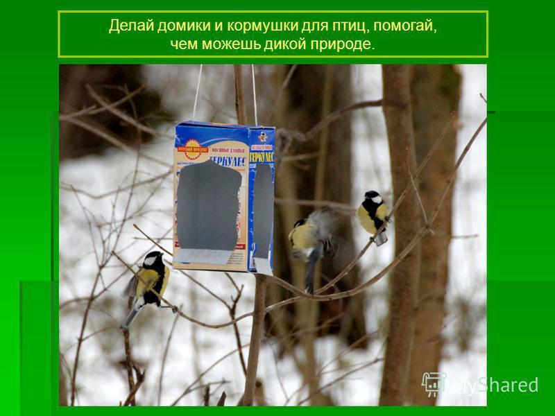 Делай домики и кормушки для птиц, помогай, чем можешь дикой природе.