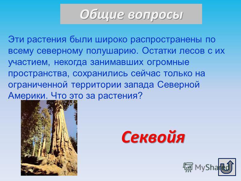 Общие вопросы Секвойя Эти растения были широко распространены по всему северному полушарию. Остатки лесов с их участием, некогда занимавших огромные пространства, сохранились сейчас только на ограниченной территории запада Северной Америки. Что это з