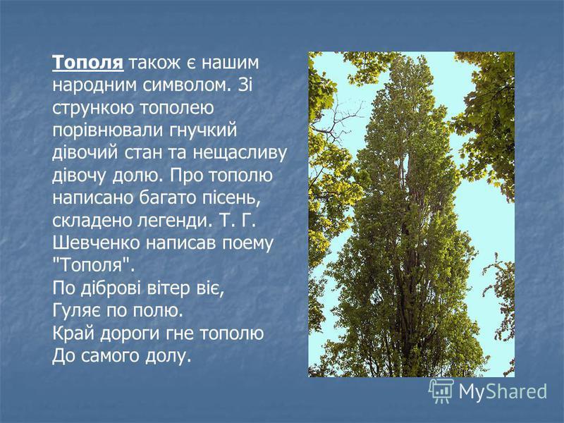 Тополя також є нашим народним символом. Зі стрункою тополею порівнювали гнучкий дівочий стан та нещасливу дівочу долю. Про тополю написано багато пісень, складено легенди. Т. Г. Шевченко написав поему