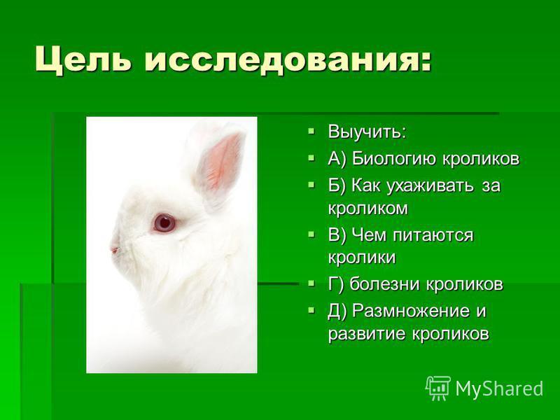 Цель исследования: Выучить: Выучить: А) Биологию кроликов А) Биологию кроликов Б) Как ухаживать за кроликом Б) Как ухаживать за кроликом В) Чем питаются кролики В) Чем питаются кролики Г) болезни кроликов Г) болезни кроликов Д) Размножение и развитие