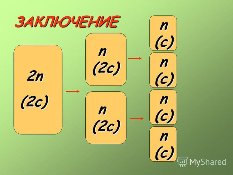 ЗАКЛЮЧЕНИЕ 2n 2n(2c) n(2c) 2n(2c) n(2c) n(c) n(c) n(c) n(c)