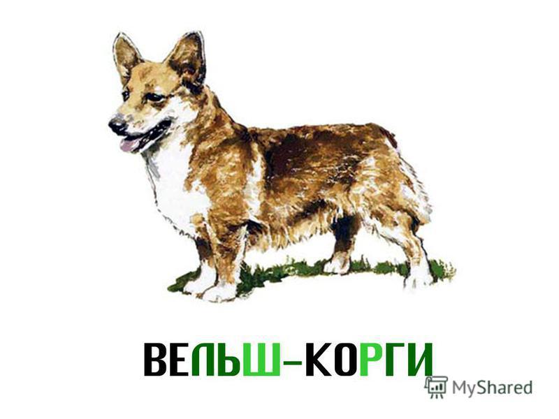 ВЕЛЬШ-КОРГИ