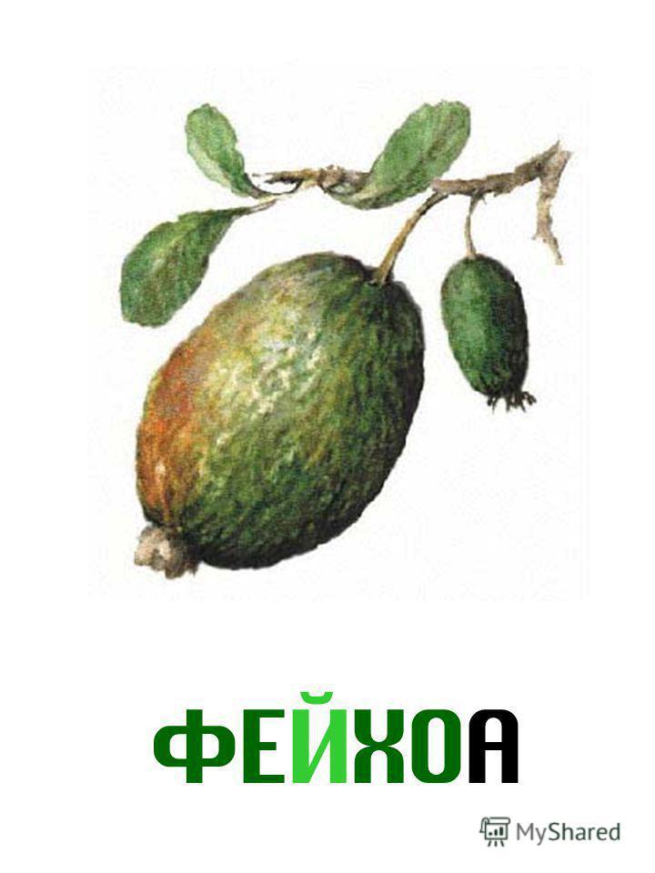 ФЕЙХОА