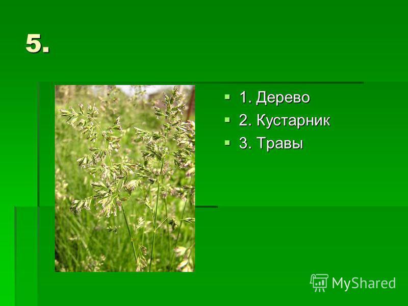 5. 1. Дерево 1. Дерево 2. Кустарник 2. Кустарник 3. Травы 3. Травы