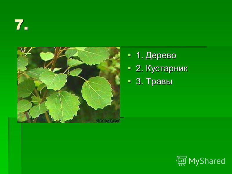 7. 1. Дерево 1. Дерево 2. Кустарник 2. Кустарник 3. Травы 3. Травы