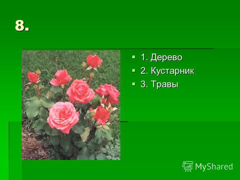8. 1. Дерево 1. Дерево 2. Кустарник 2. Кустарник 3. Травы 3. Травы