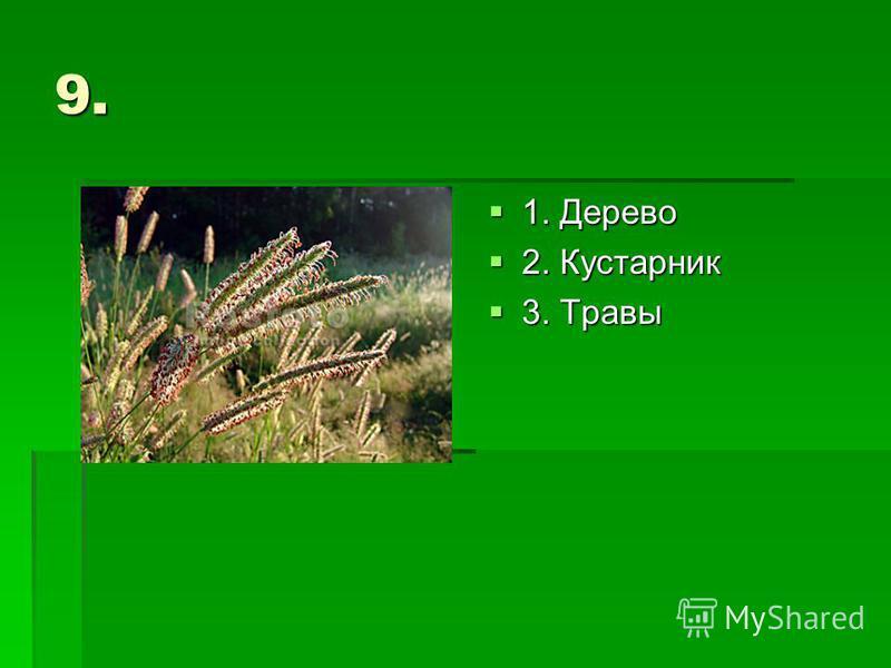 9. 1. Дерево 1. Дерево 2. Кустарник 2. Кустарник 3. Травы 3. Травы