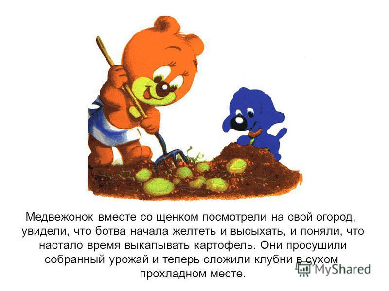 Медвежонок вместе со щенком посмотрели на свой огород, увидели, что ботва начала желтеть и высыхать, и поняли, что настало время выкапывать картофель. Они просушили собранный урожай и теперь сложили клубни в сухом прохладном месте.