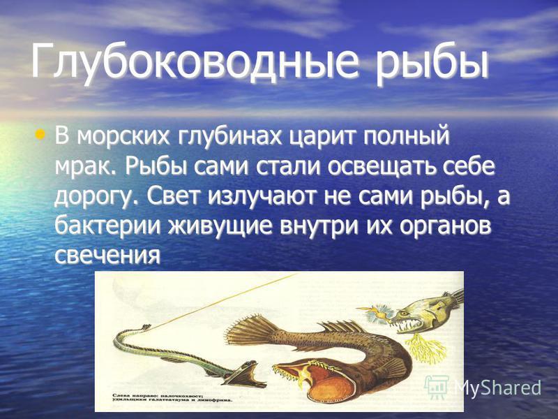 Глубоководные рыбы В морских глубинах царит полный мрак. Рыбы сами стали освещать себе дорогу. Свет излучают не сами рыбы, а бактерии живущие внутри их органов свечения В морских глубинах царит полный мрак. Рыбы сами стали освещать себе дорогу. Свет