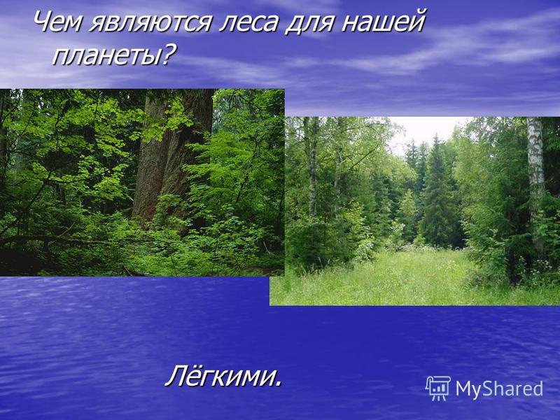 Чем являются леса для нашей планеты? Лёгкими.