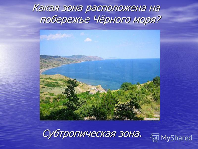 Какая зона расположена на побережье Чёрного моря? Субтропическая зона.