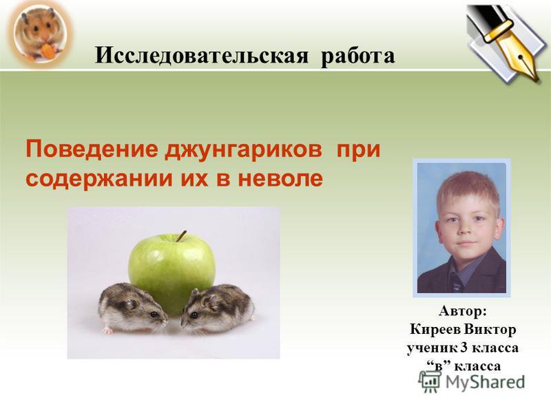 Автор: Киреев Виктор ученик 3 класса в класса Исследовательская работа Поведение джунгариков при содержании их в неволе