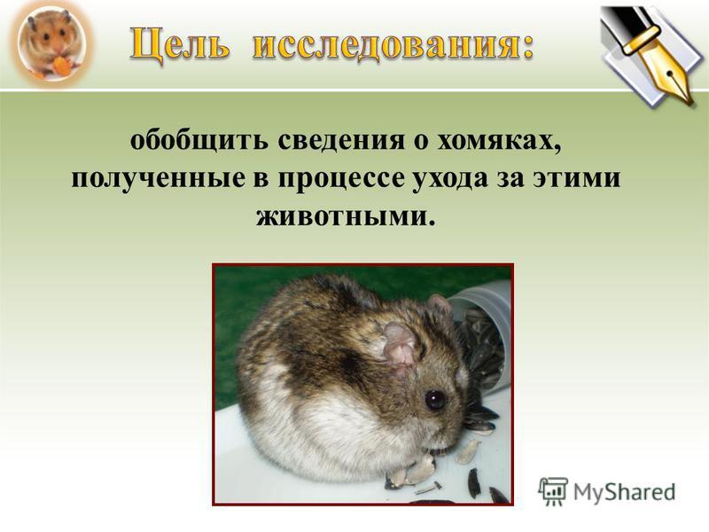 обобщить сведения о хомяках, полученные в процессе ухода за этими животными.