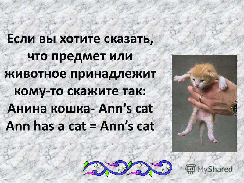 Если вы хотите сказать, что предмет или животное принадлежит кому-то скажите так: Анина кошка- Anns cat Ann has a cat = Anns cat